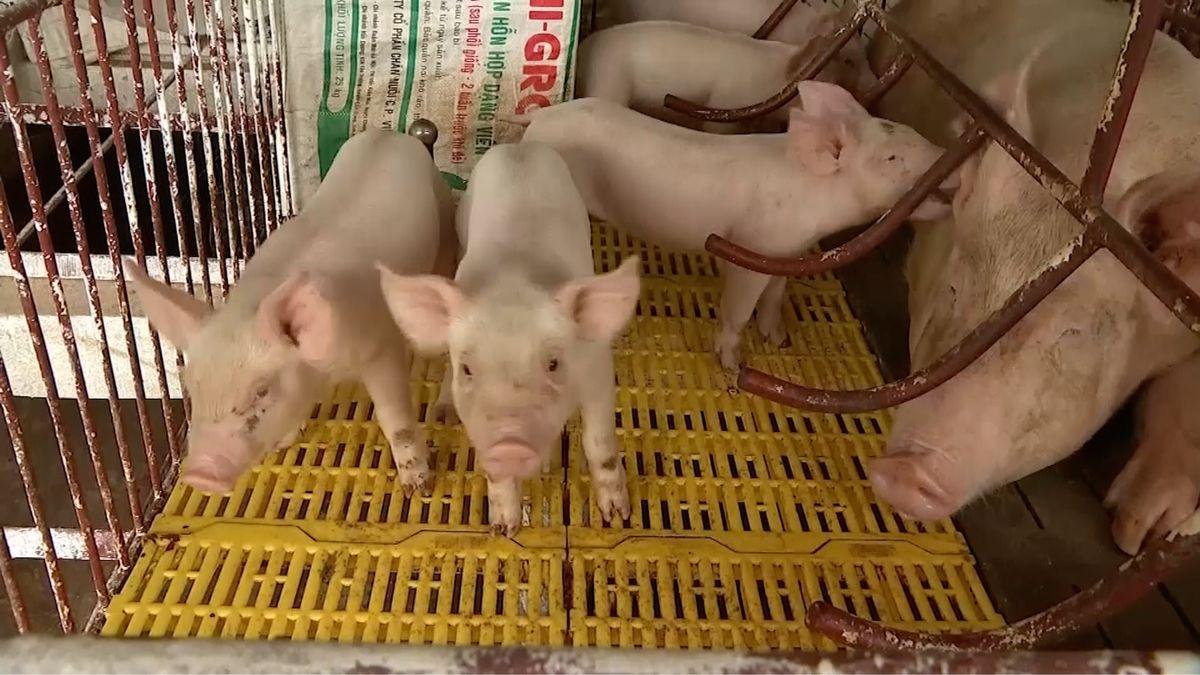Lidl stahuje vepřové maso. Bylo vněm 60krát víc antibiotik než je limit