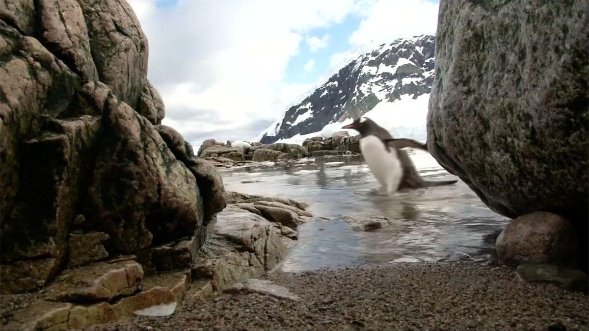 Mikroplasty dorazily ke břehům Antarktidy, znečištěný je i sníh