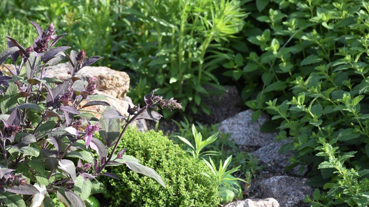 """Nový Zéland otevře první """"humánní"""" vězení. Nejtěžší zločinci budou moci pěstovat bylinky i cvičit jógu"""