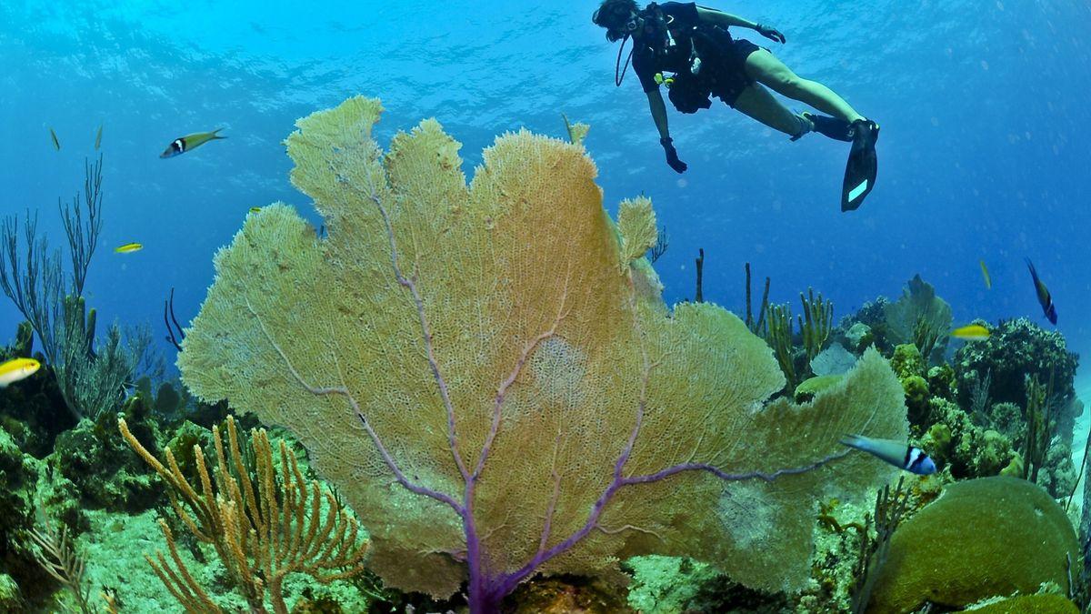 Rychlokurzy potápění jsou dobré jako zážitek na dovolené. Moc se toho ale nenaučíte