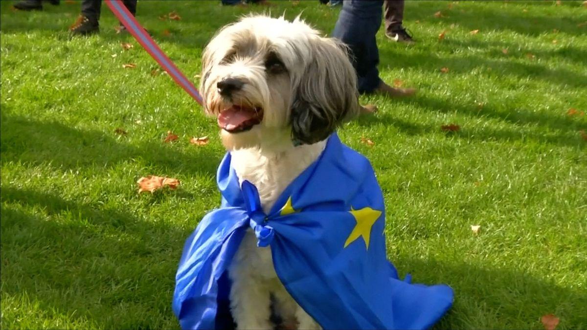 """""""Štěkám, že brexit je šílenství."""" Britové uspořádali pochod se psy proti odchodu zEU"""