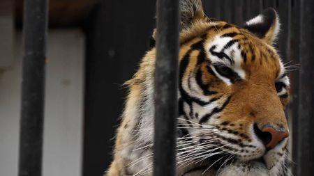Budou cirkusy bez zvířat? Když se to stane, vypustíme na Václaváku všechny lvy a tygry, vyhrožujeBerousek