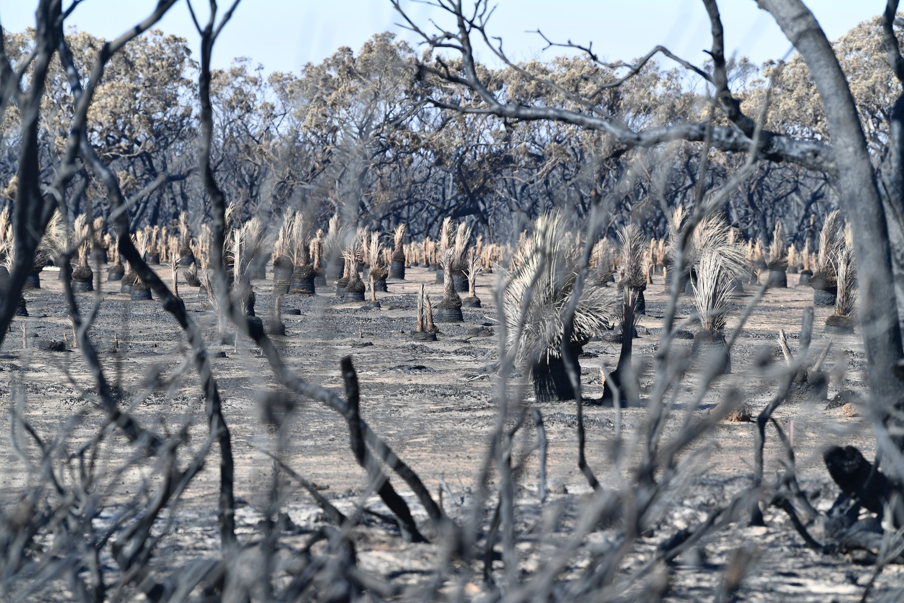 Celkový pohled na poškození ohněm na ostrově Kangaroo v Austrálii, 6. ledna 2020.