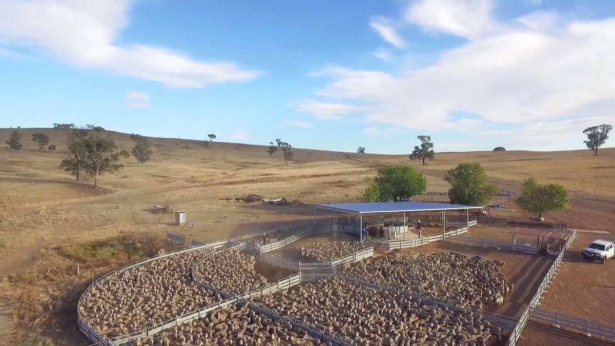 Byznys: Chytré farmy vČesku. Roboti češou jablka, stáda hlídají drony