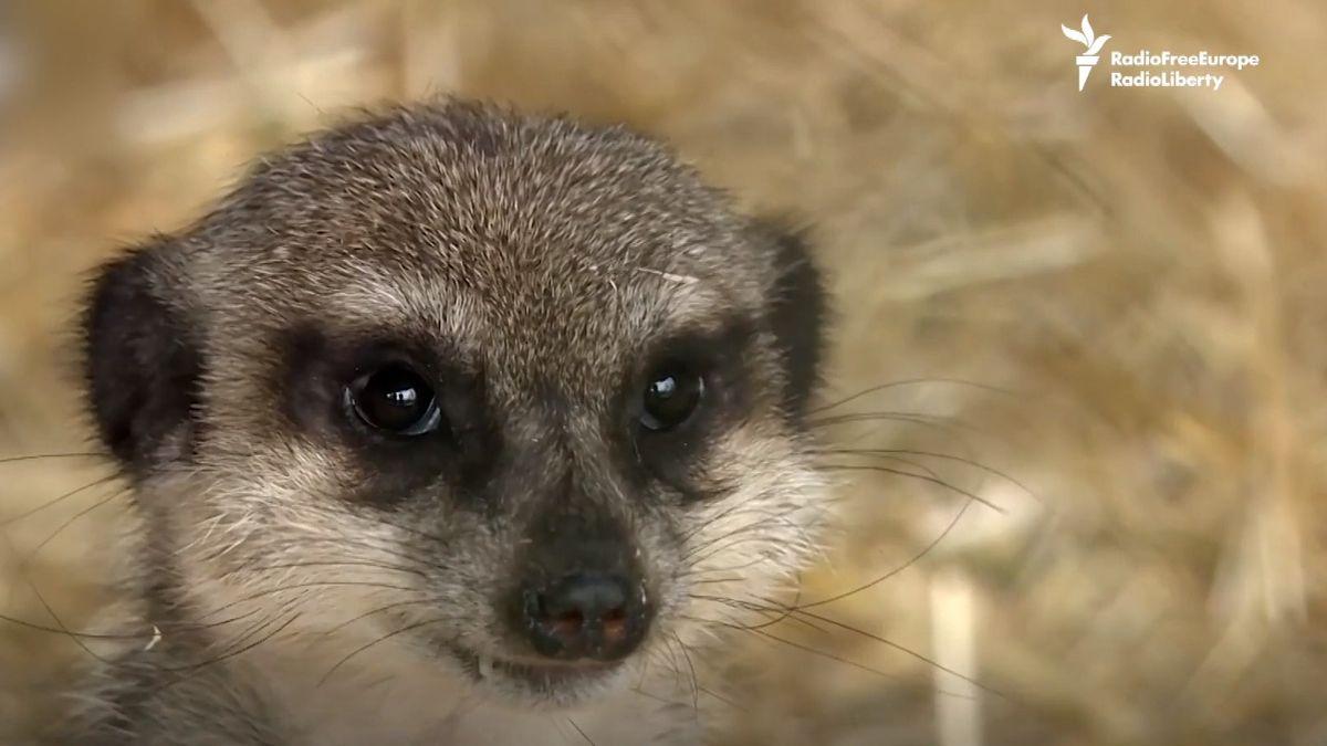Zoologická zahrada pro zvířata se smutným příběhem