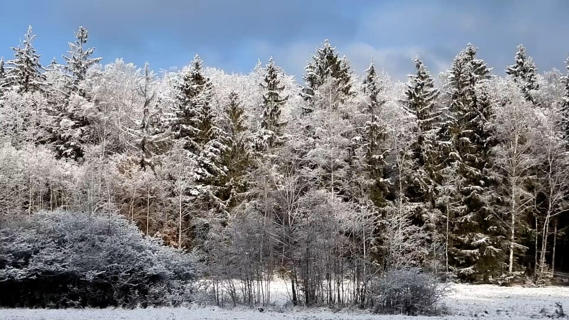 Předpověď počasí: Sníh prozatím neroztaje, ovíkendu může navíc ještě připadnout