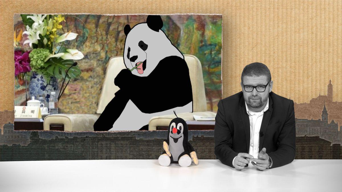 Šťastné pondělí: Zachraňte pandu! Pražská zoo má smůlu, my ale prezidenta Zemana chválíme