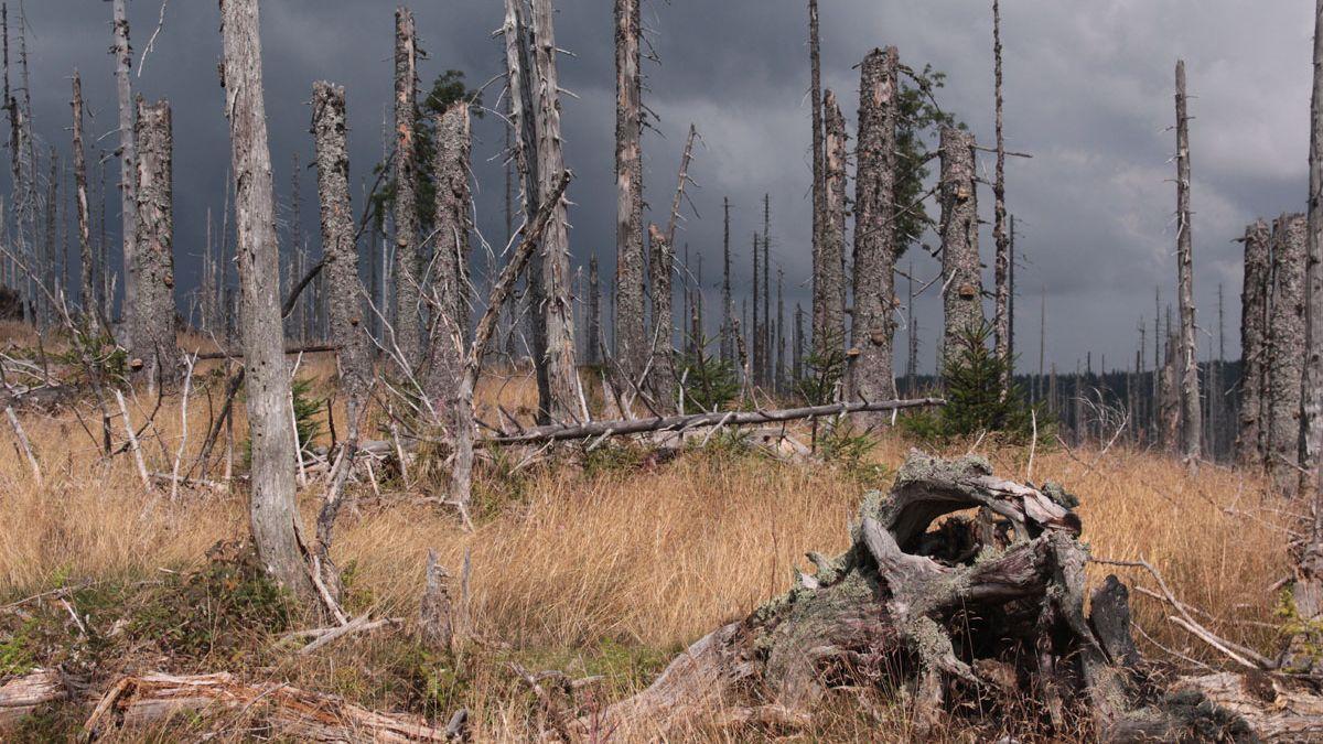 Národní park Šumava se nově rozdělí na čtyři části