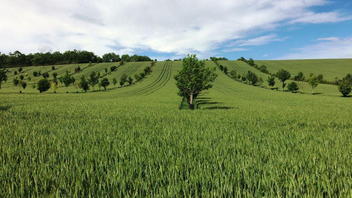 Bory budou šumět po celé EU. Brusel chce vysadit tři miliardy stromů