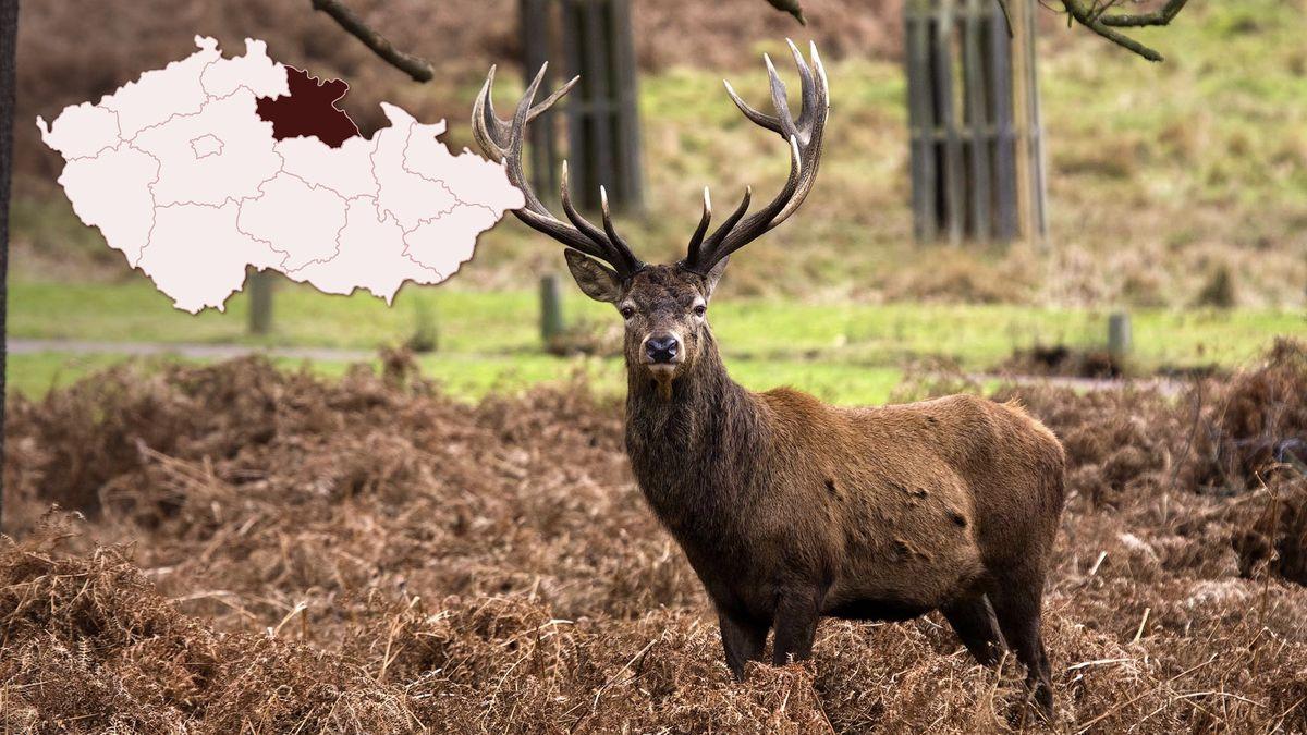 Myslivec našel uBoletic kulovnici, kterou odnesl jelen