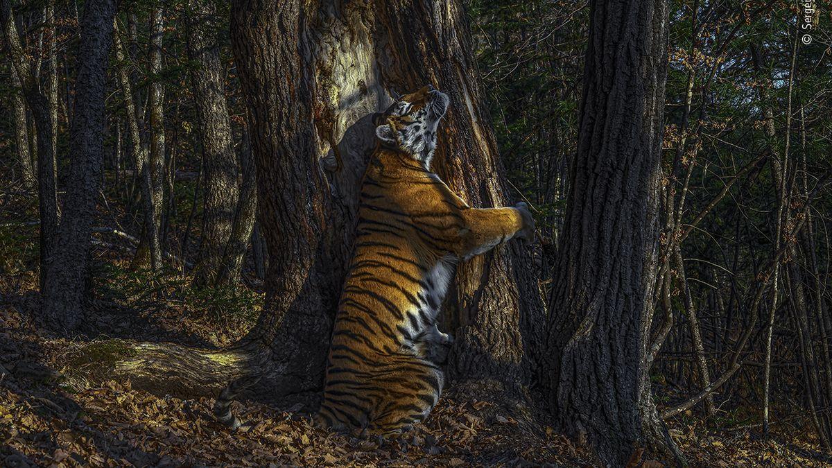 Nejlepší snímky divoké přírody. Na vítězný záběr číhal fotograf 11měsíců