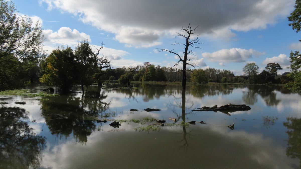 Podívejte se: Povodeň zaplavila oboru, lesníci jsou nadšení