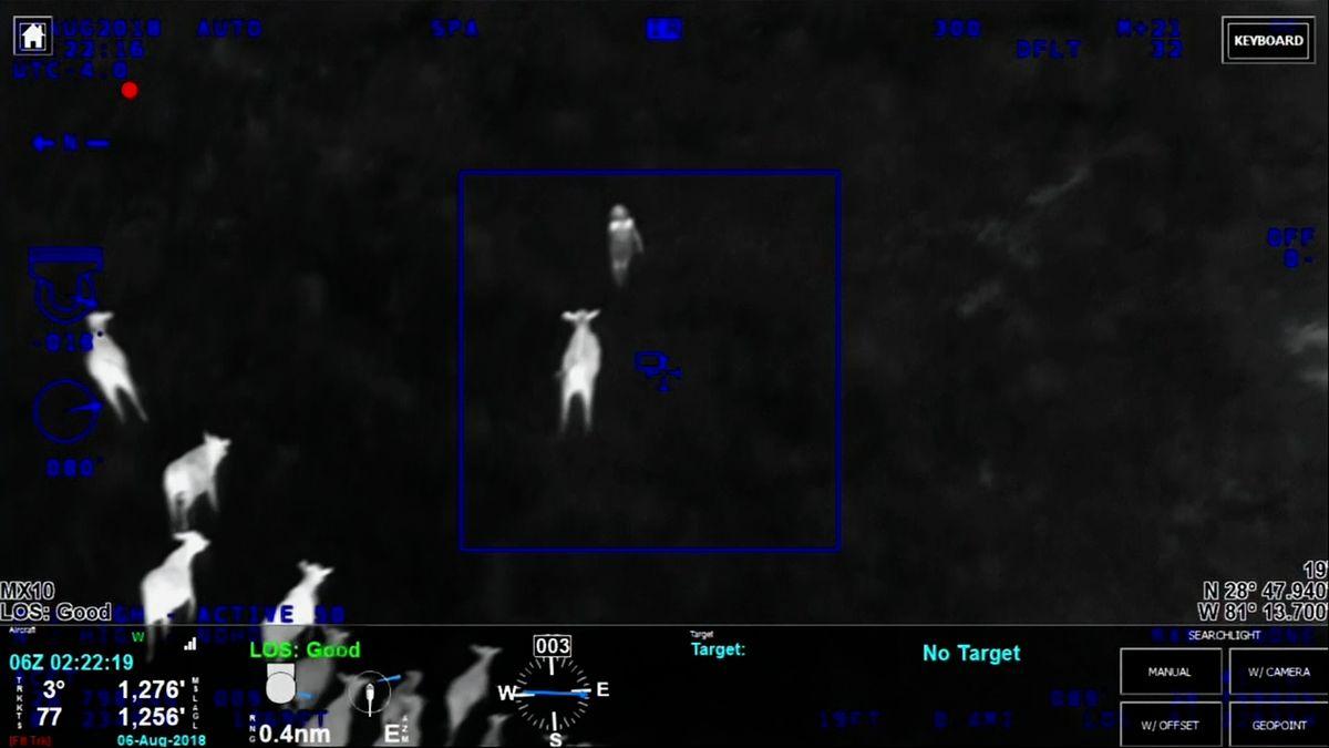 Žena na Floridě prchala po louce, kde se pásly krávy. Stádo ji nahnalo přímo do policejní náruče