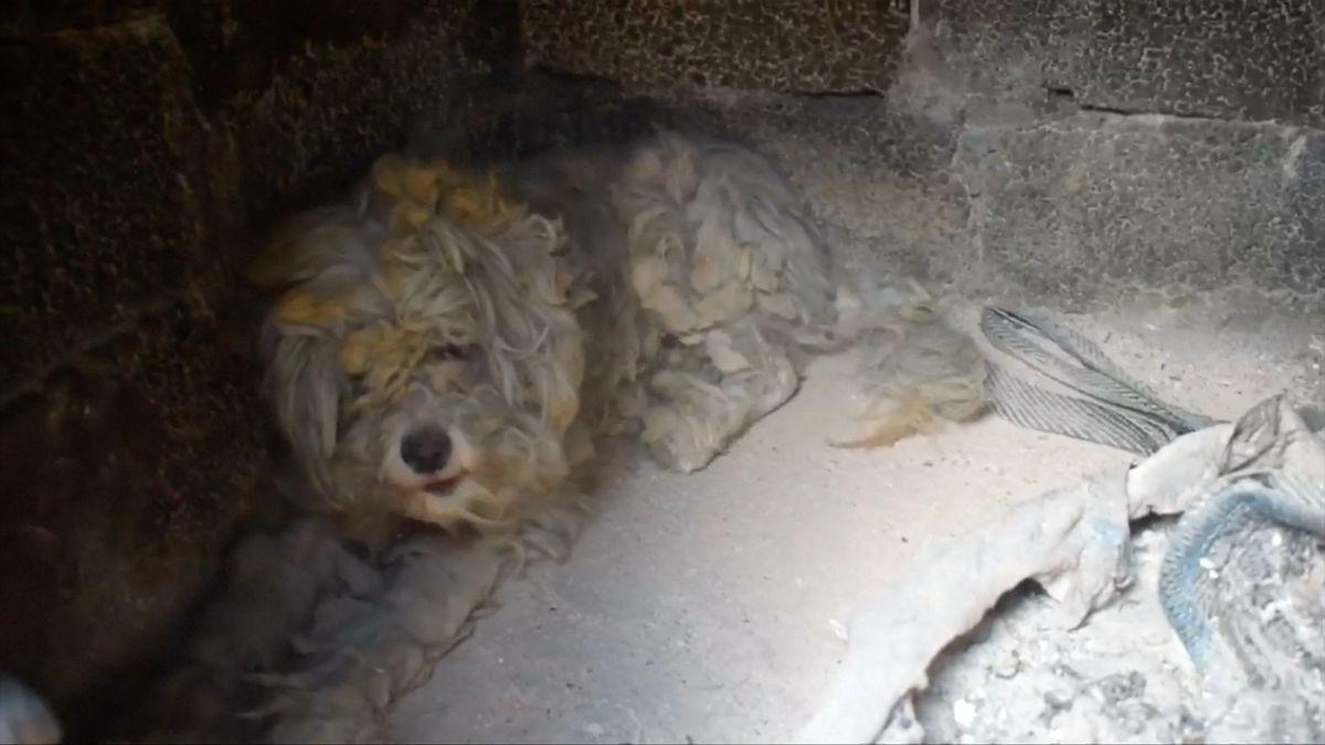 Pes v Řecku přežil ničivý požár. Před plameny se schoval do krbu