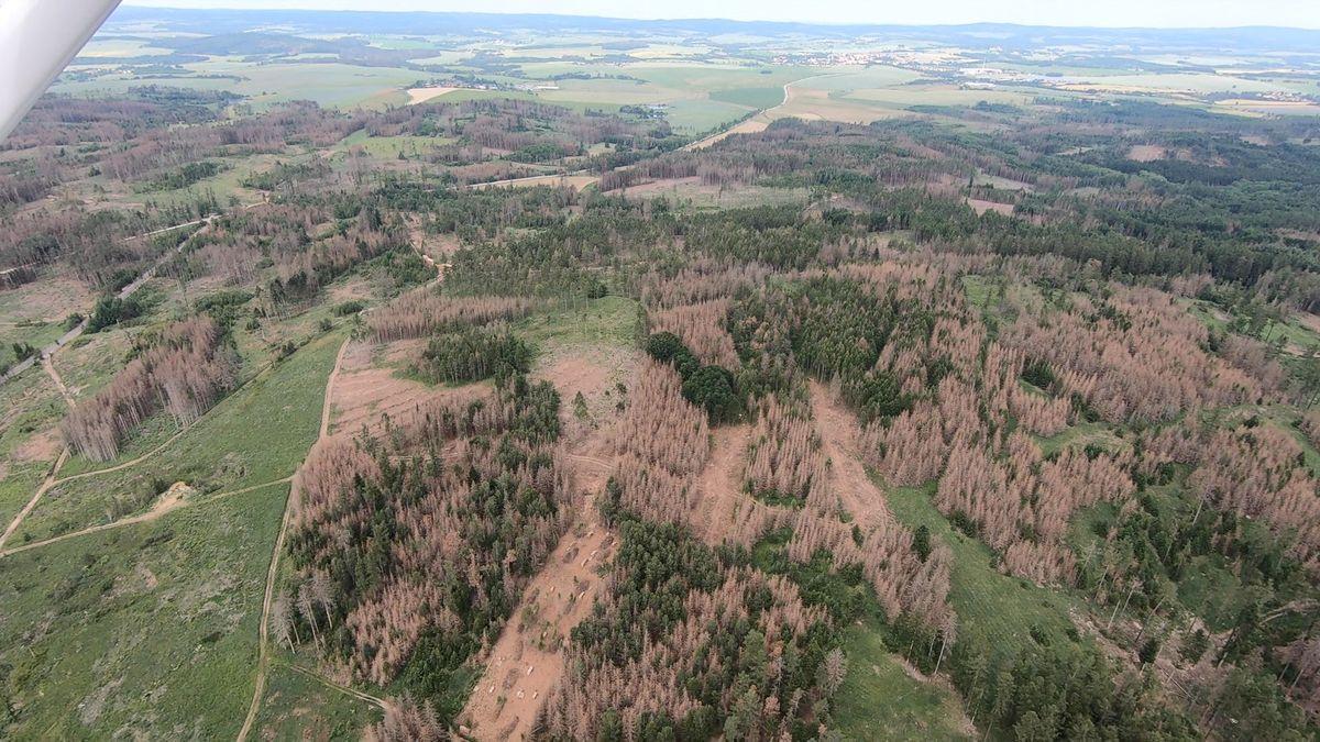 Kvůli suchu a kůrovci musí kzemi dvakrát více stromů než před kalamitou