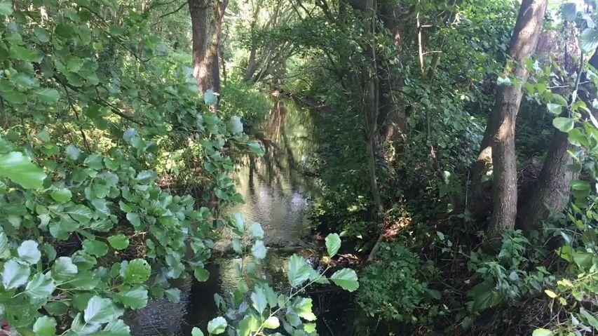Všude vČesku se stromy sází, vpřírodní památce jich chce Povodí Labe pokácet 3,5tisíce