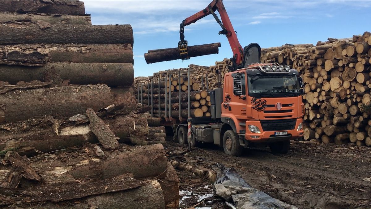 Kůrovcové těžby ve státních lesích vzrostly na trojnásobek