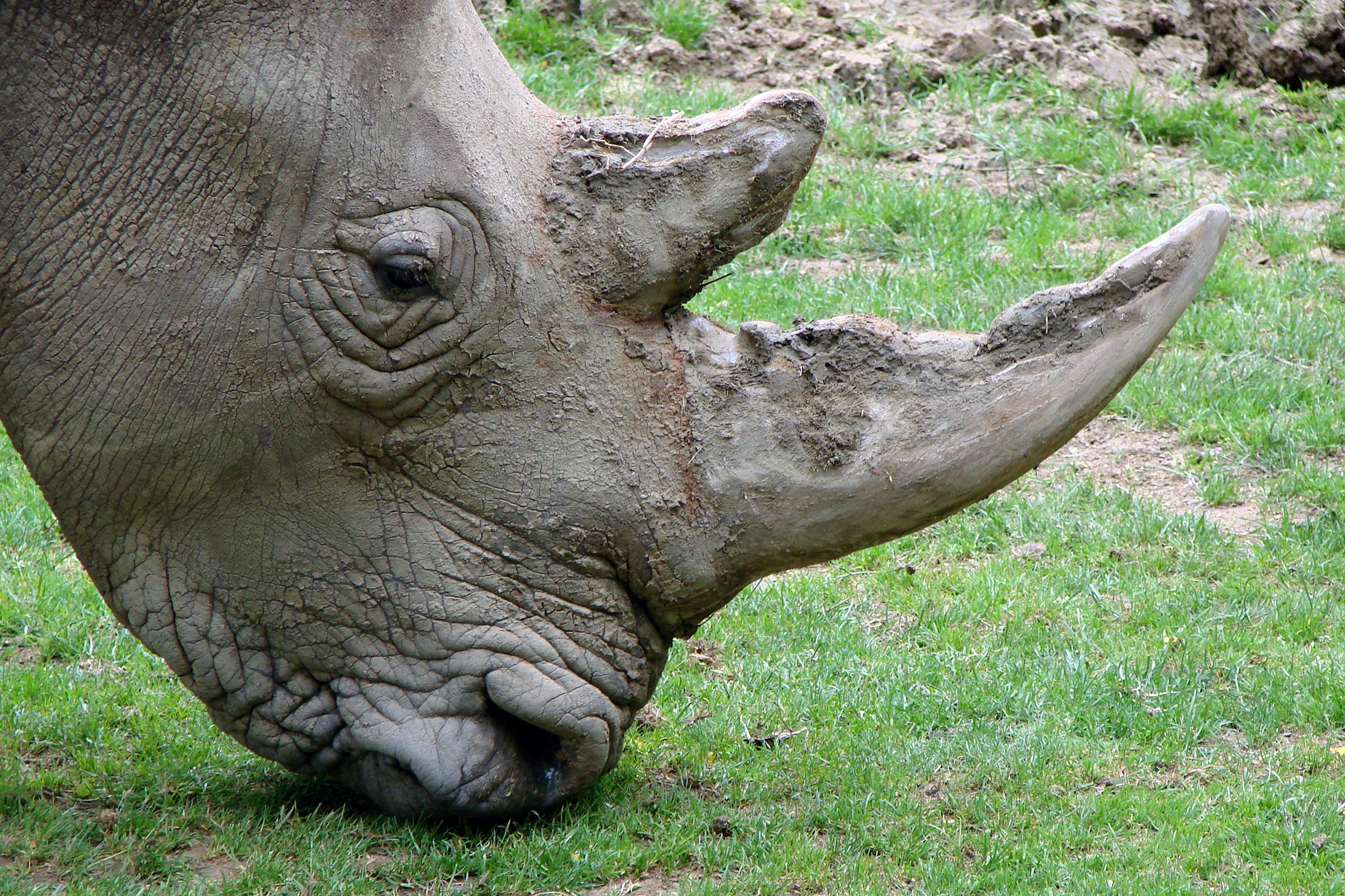 Policista chtěl prodat roh nosorožce, tvrdí GIBS