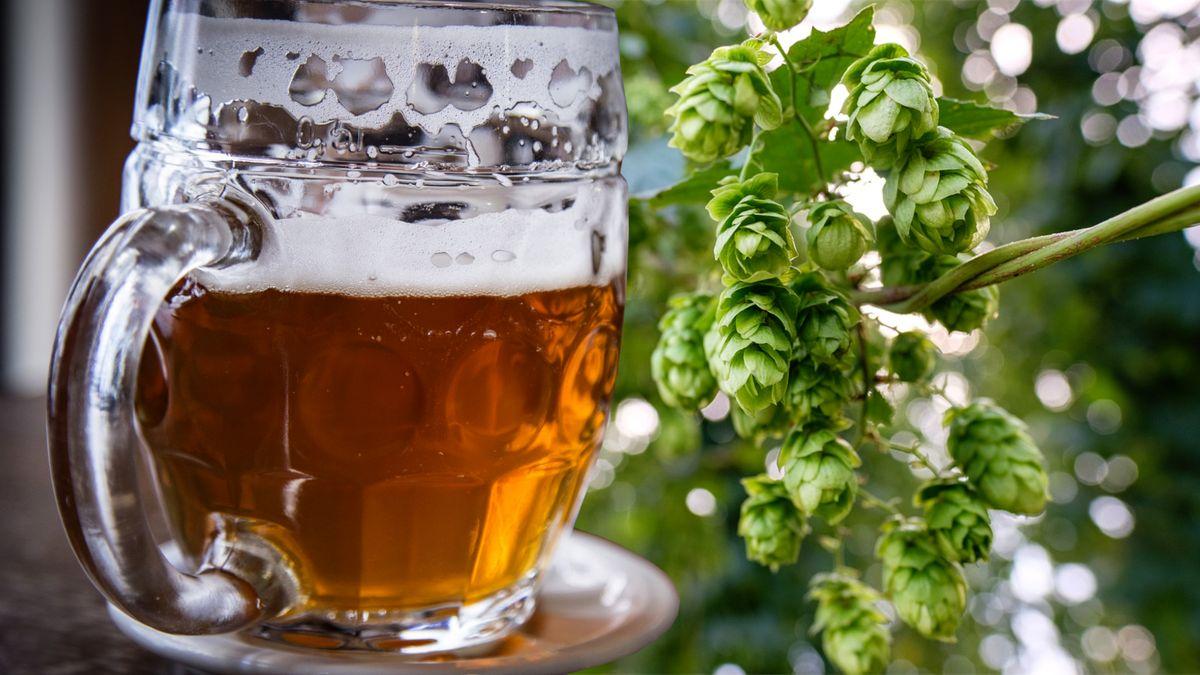 Výroba piva klesne odva miliony hektolitrů, odhaduje svaz