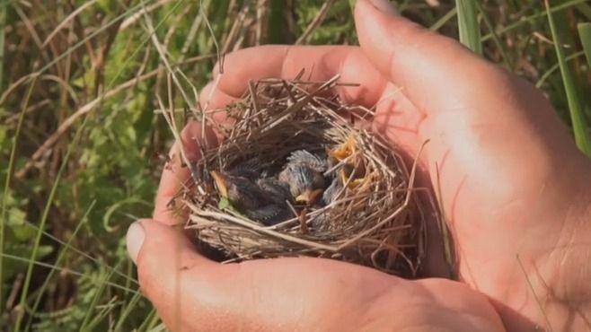 Rybník Nesyt zažil podle ornitologů mimořádnou ptačí sezonu