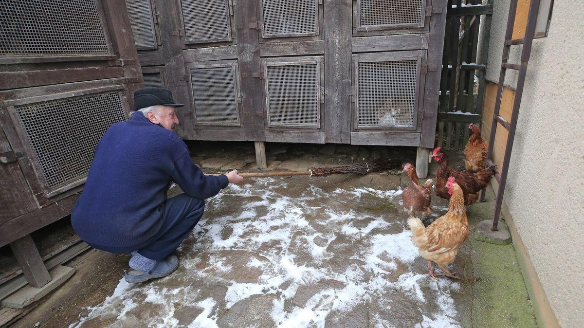 Česko má další případ ptačí chřipky, tentokrát na Pardubicku