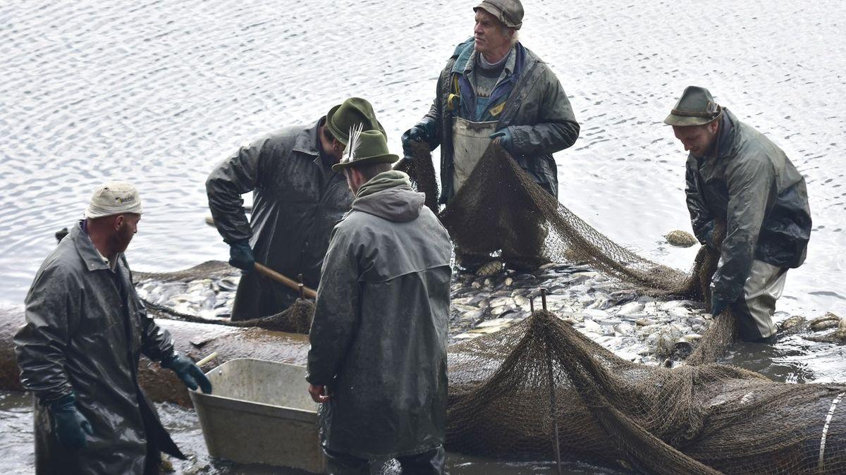 Klatovské rybářství začalo sjarními výlovy, ryby jsou kvalitní