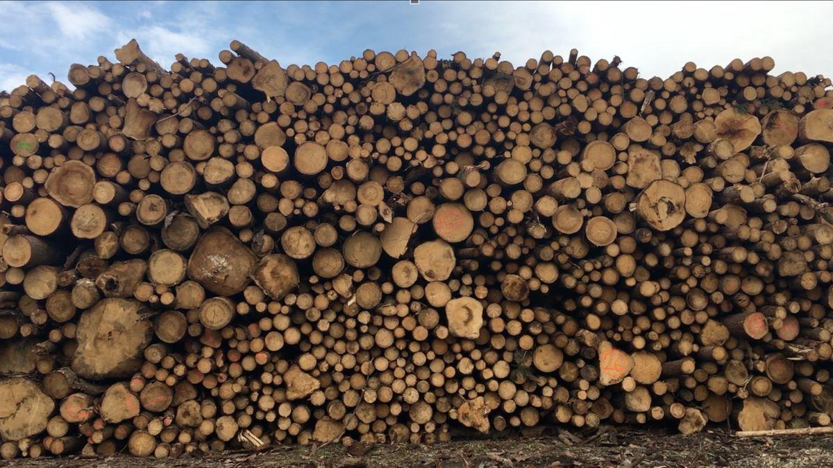 Lesy ČR a policie mají mobilní aplikaci na potírání zlodějů dřeva