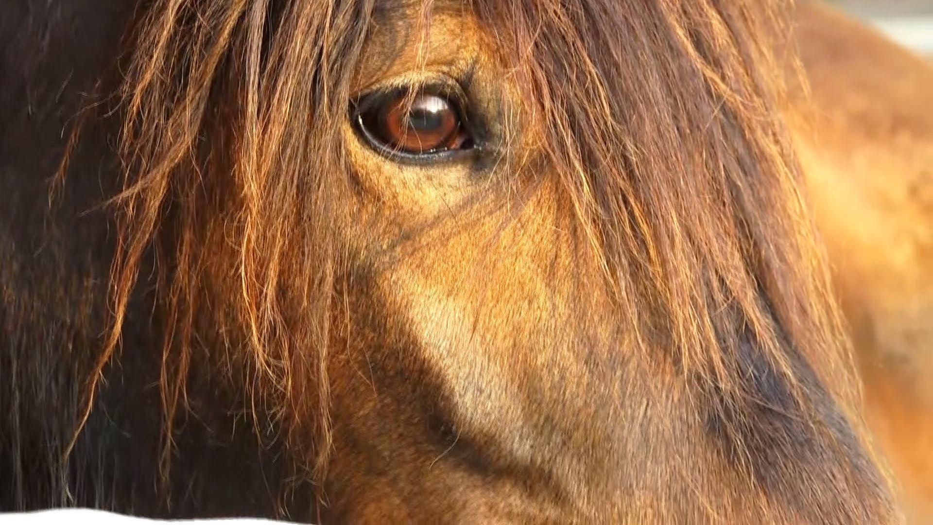 Koně pomáhají i dvouměsíčním miminkům. Při hiporehabilitaci však nejde jen o fyzické zdraví