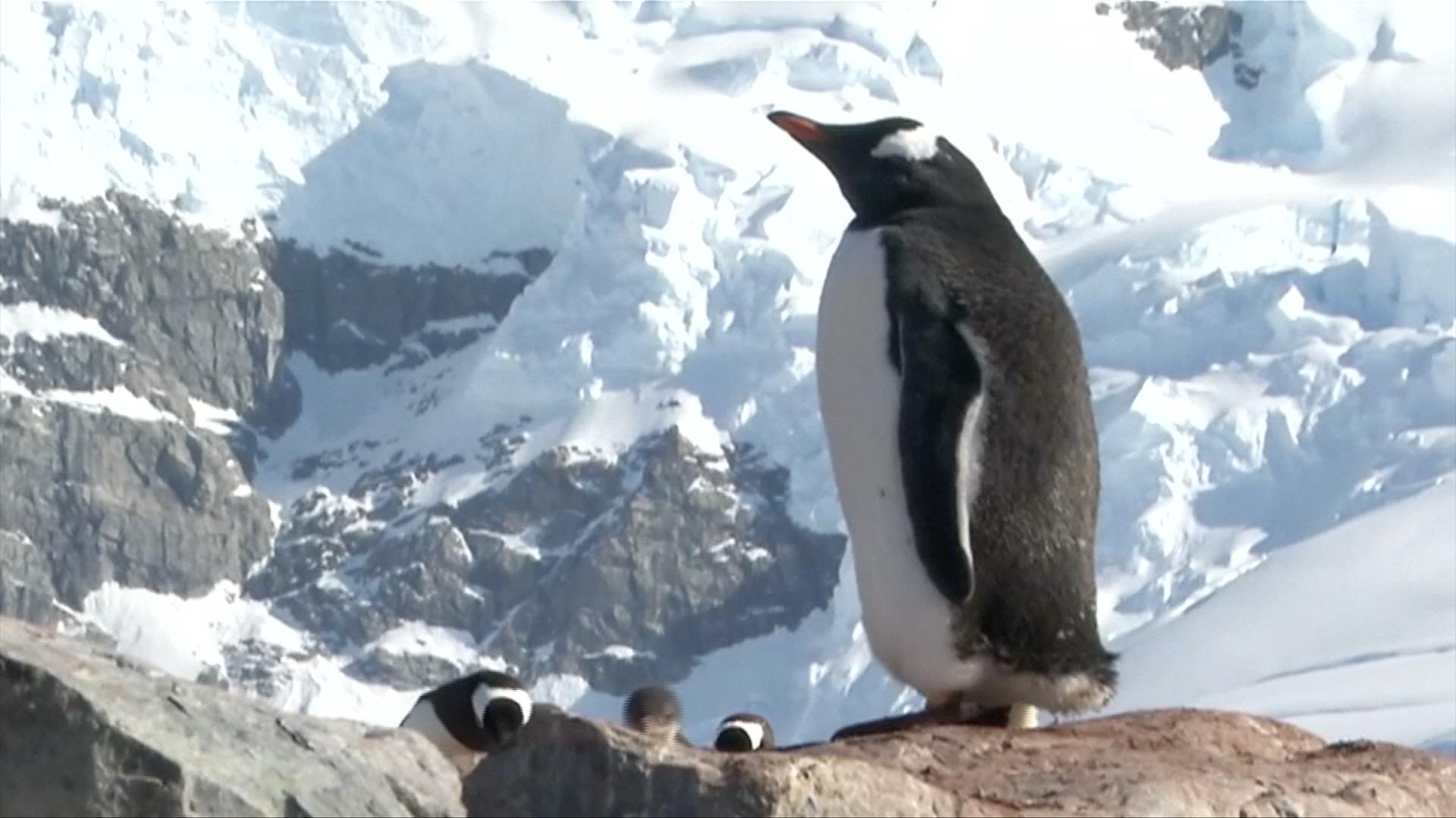 Greenpeace chce ochránit nedotčenou Antarktidu. Má vzniknout největší přírodní rezervace na světě