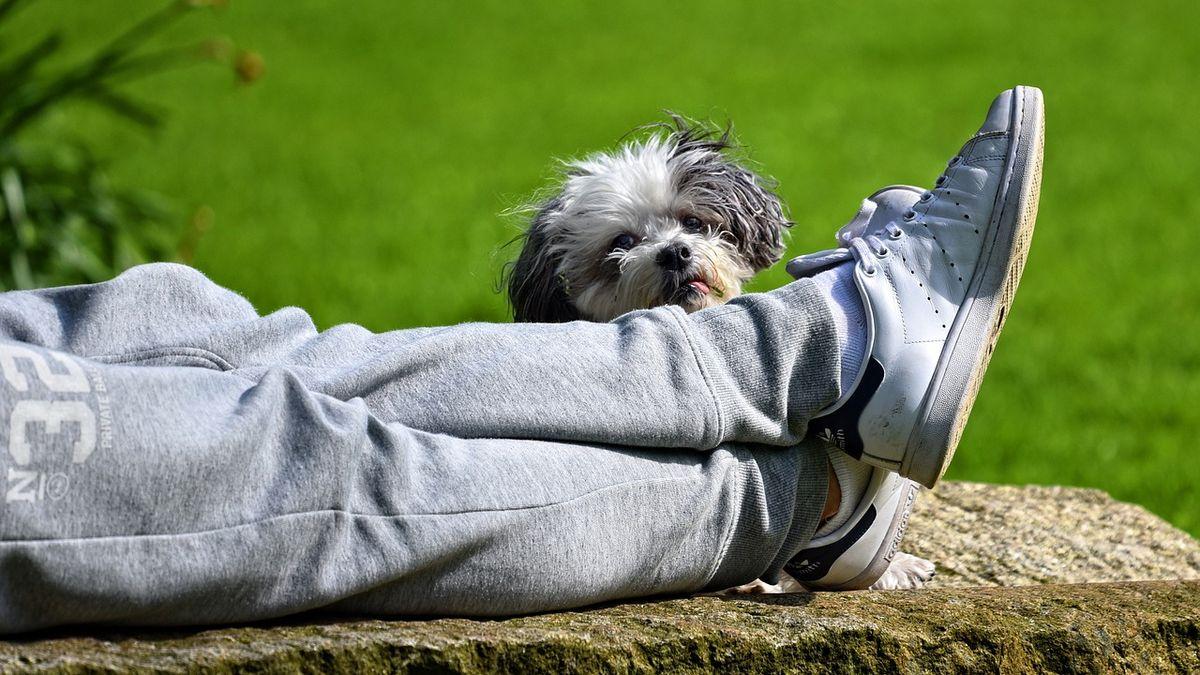 Psi jsou v dočasných péčích často kvůli špatnému zdravotnímu stavu. Jsou ale i případy, kdy je opustí nezodpovědní páníčci