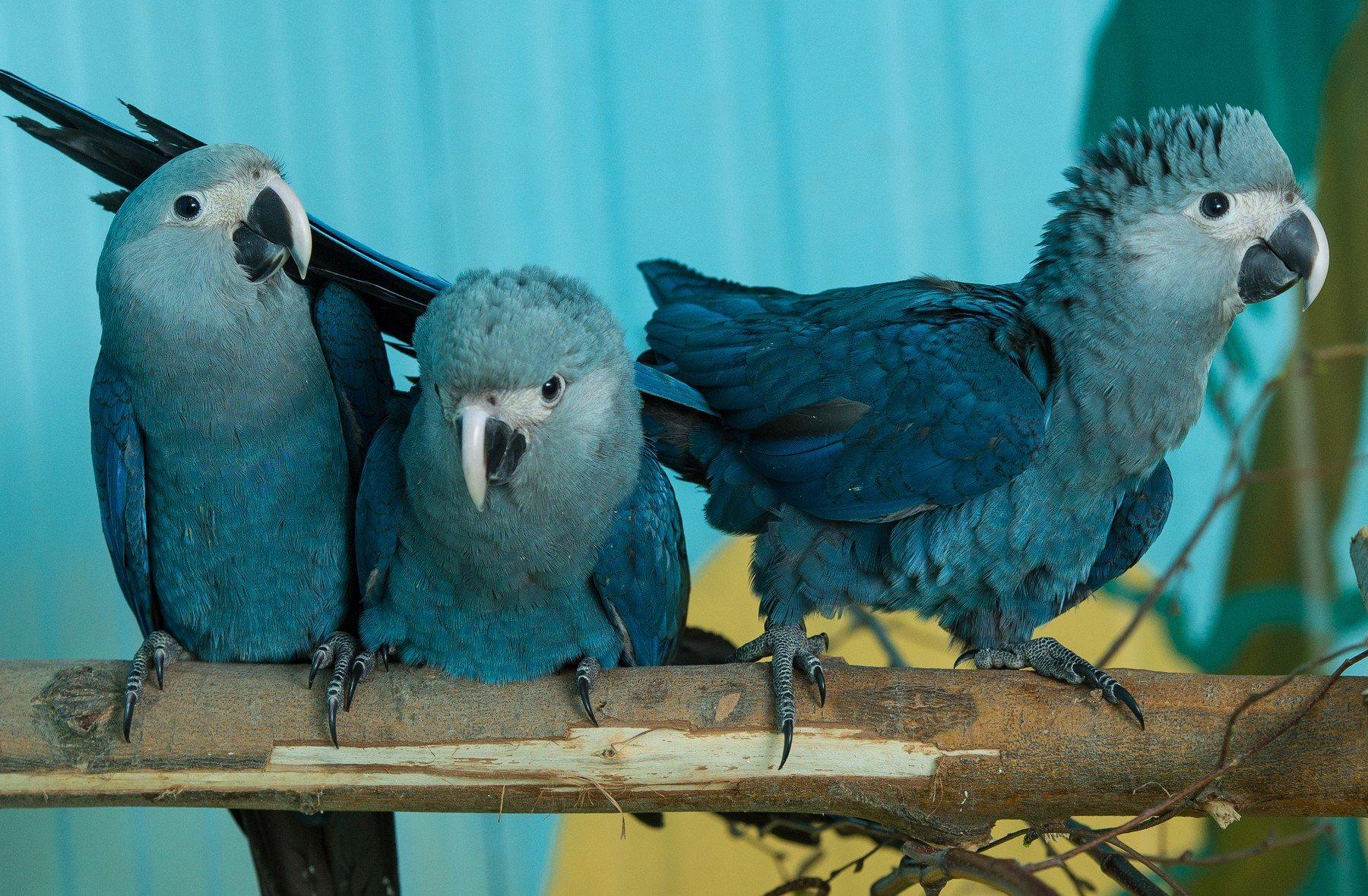Ukazují velké ptáky