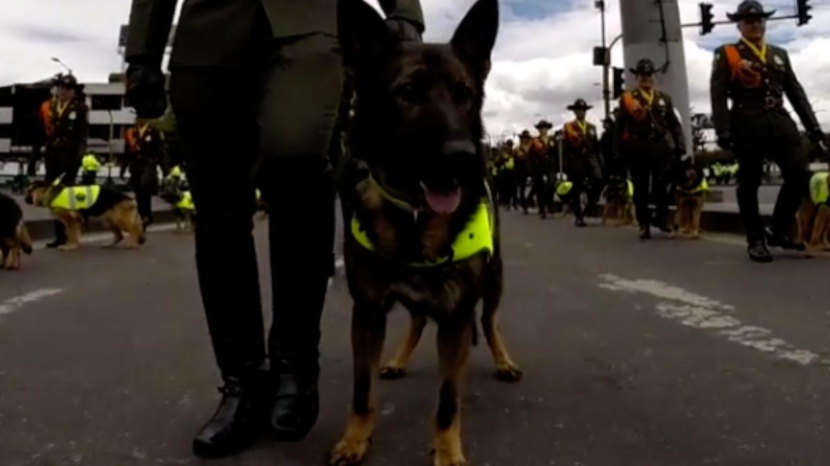 Kolumbijský drogový kartel vypsal milionovou odměnu za psa, který mu ničí byznys