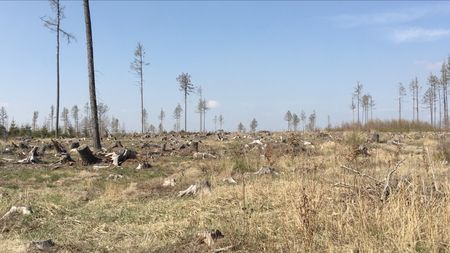 Včeských nížinách vznikne lesostep, úrodný pás se posune na sever. Aco budedál?