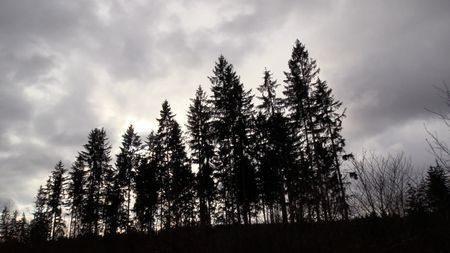 Vánoce budou bez sněhu, vČechách se oteplí až na 6stupňů