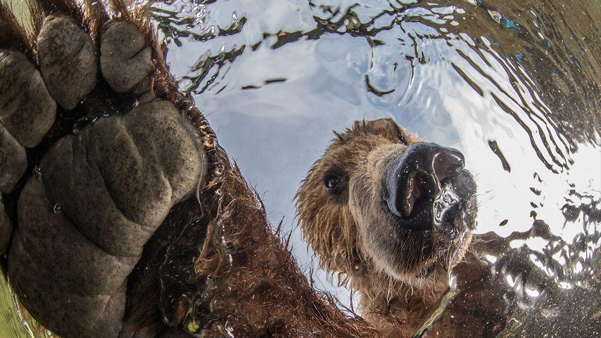 Fotogalerie: Fascinující snímky přírody a stotisícová výhra. Jak vznikly vítězné fotografie světové soutěže?