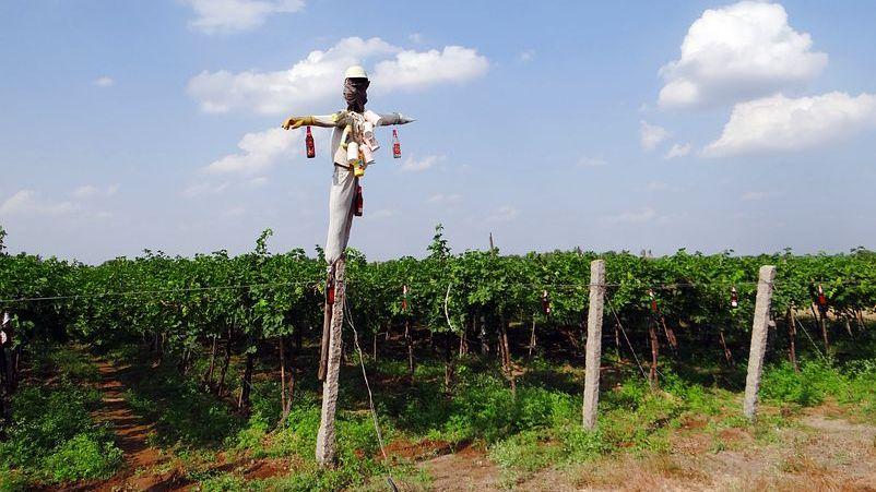 Strašák na poli. Proč se zemědělství neobejde bez chemie?