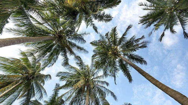 Budeme pěstovat na našich zahradách palmy? Sucho mění Česko