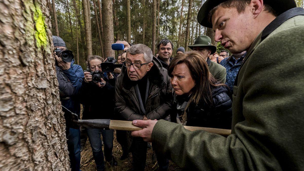 Kůrovec už sužuje všechny kraje Česka. Horší situaci země nikdy nezažila