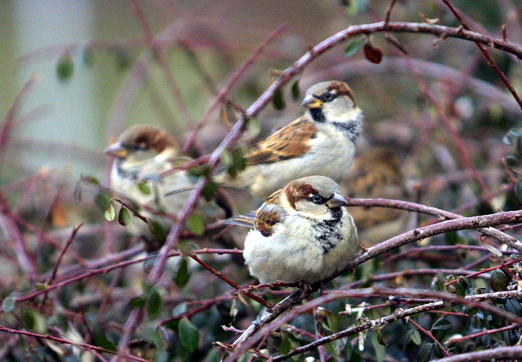 ptáky k velkému