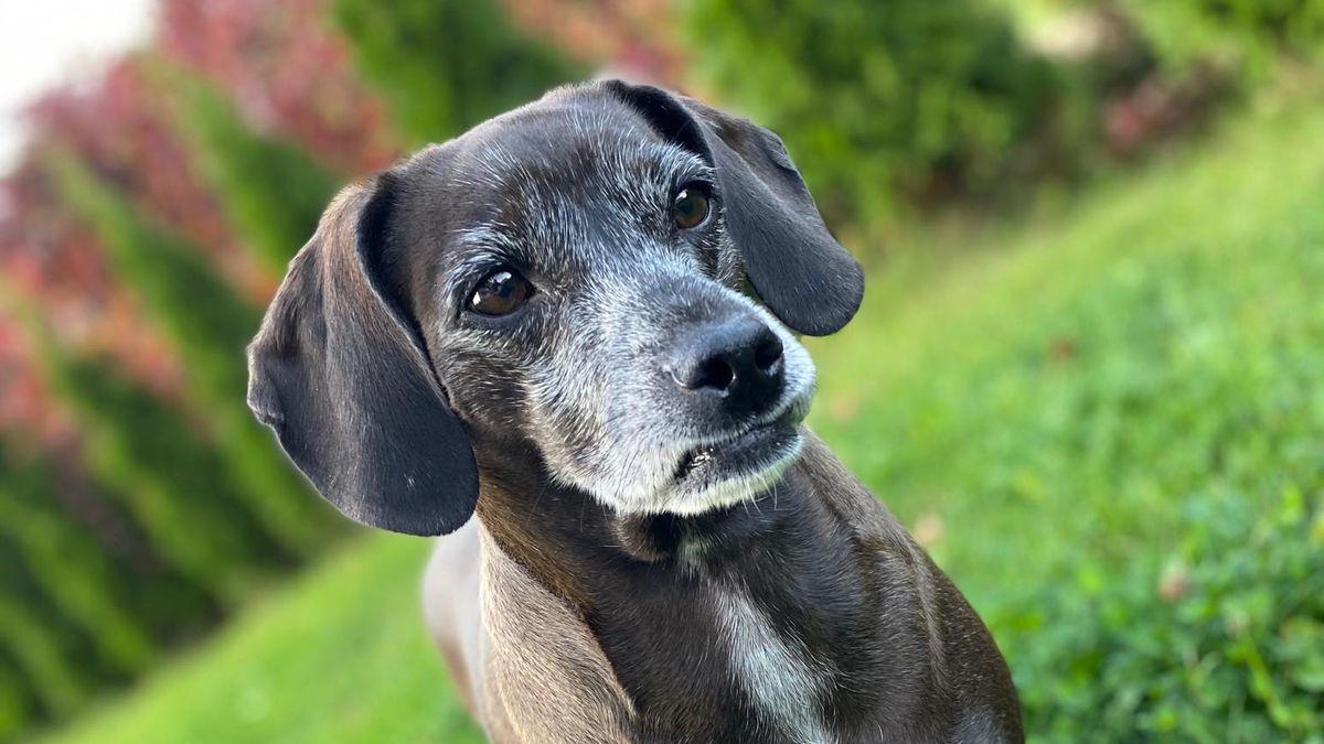 Sněmovna schválila přísnější pravidla pro chov psů