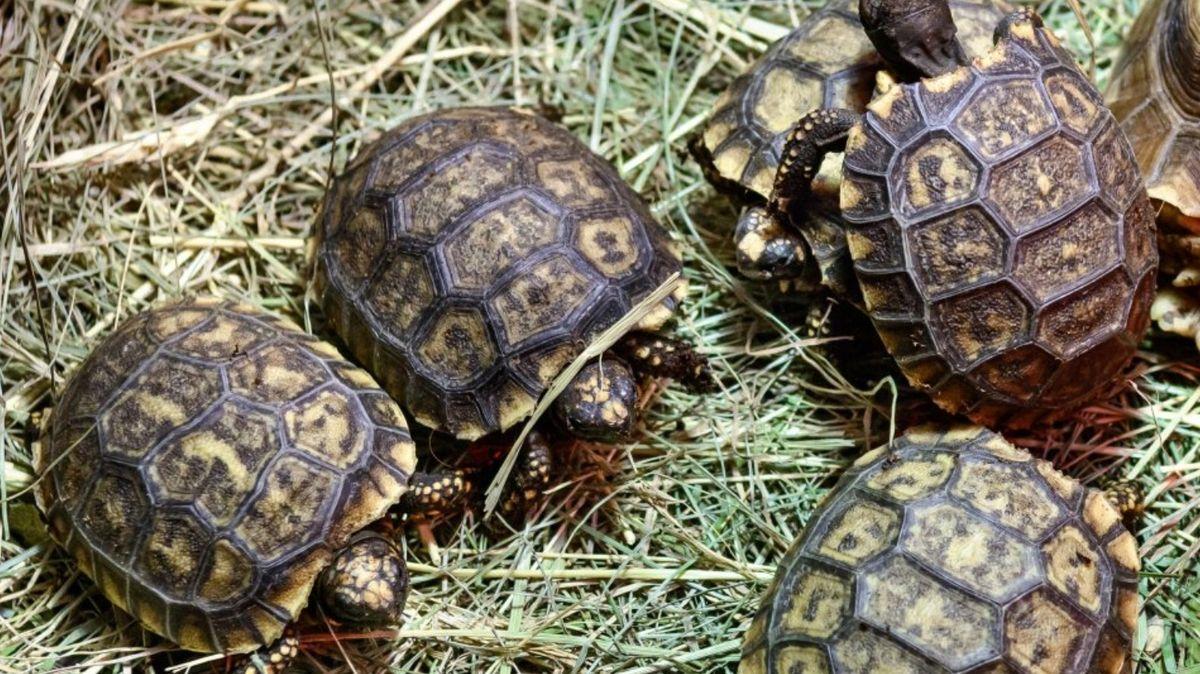 Zlínská zoo chystá výstavbu expozic pro želvy a malé savce damany