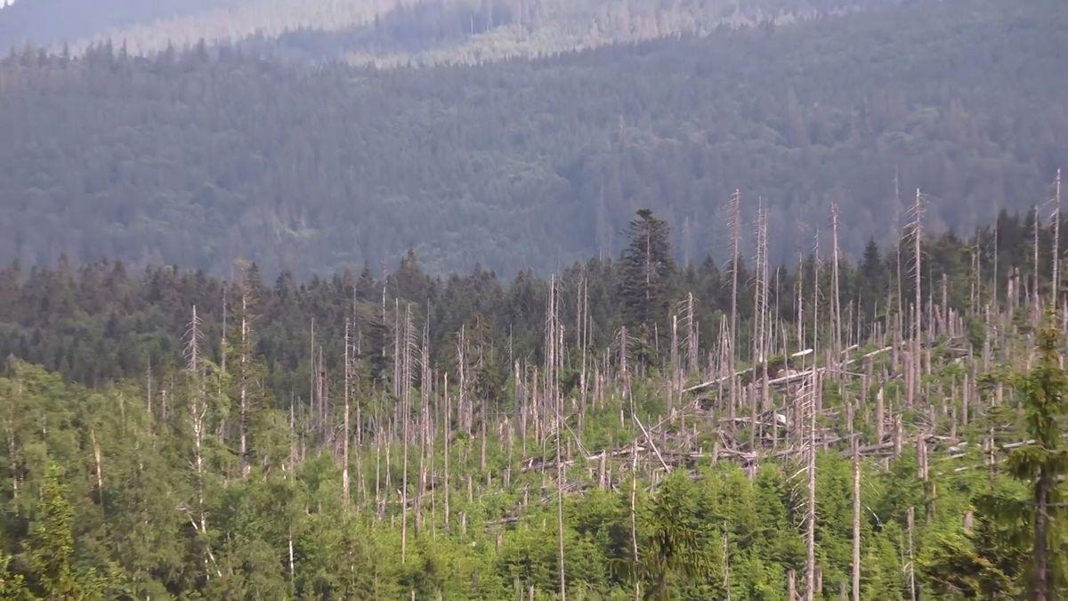 Problém s kůrovcem má člověk, ne příroda. Lesy se obnoví samy, zní z Šumavy