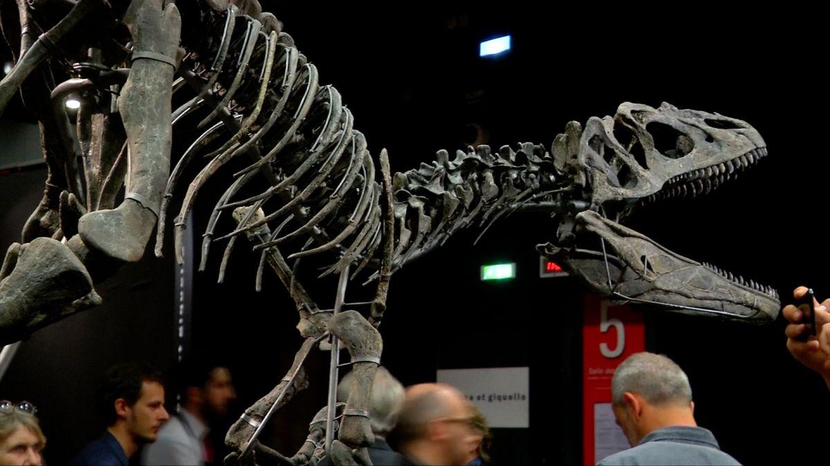 V Paříži se prodaly dvě kostry dinosaurů za dva miliony eur. Jako výzdoba do obýváku