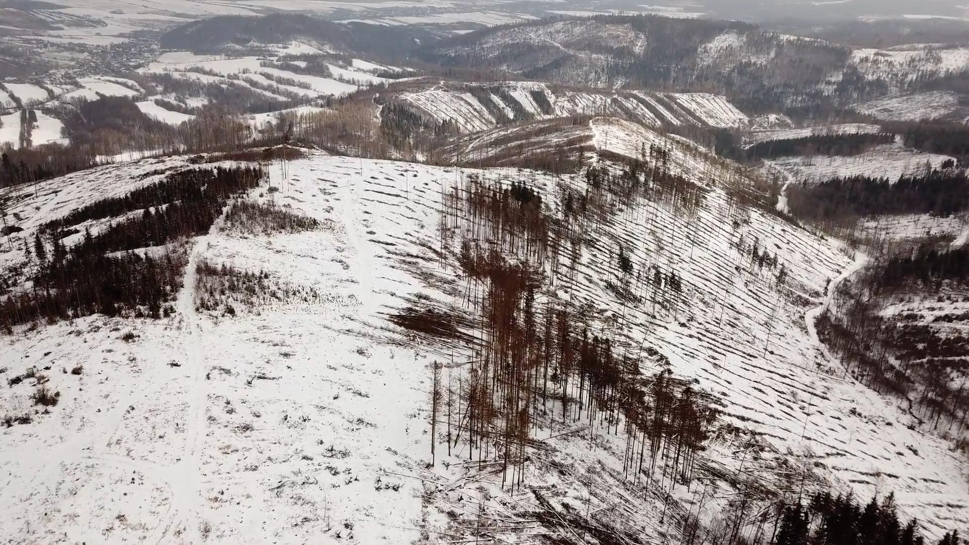 Drsný pohled z nebe na zničené lesy. Za ekologickou katastrofou v Jeseníkách stojí globální změny