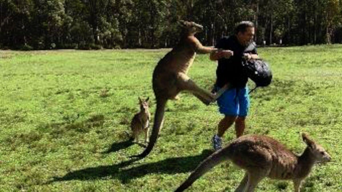 Varovné cedule nestačí. Klokani svými drápy v Austrálii způsobují hluboká zranění pro kus mrkve