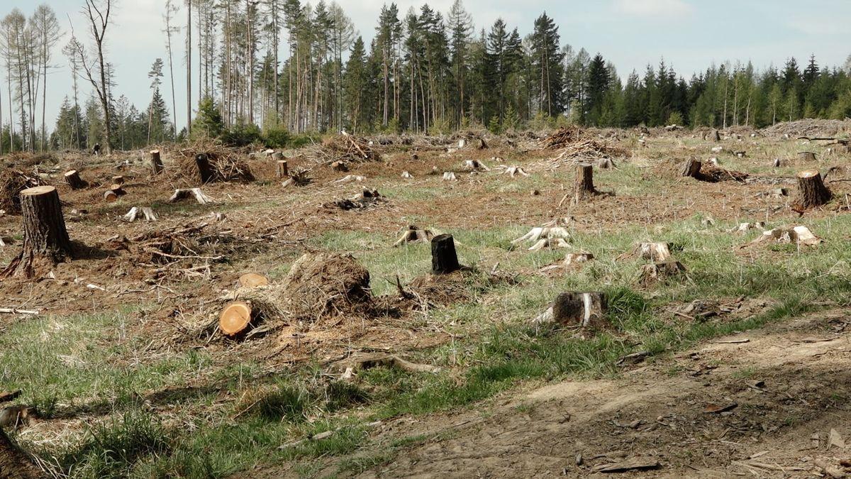 Největší ekologická katastrofa si žádá zásah. Hejtman svolává krizový štáb v boji s kůrovcem