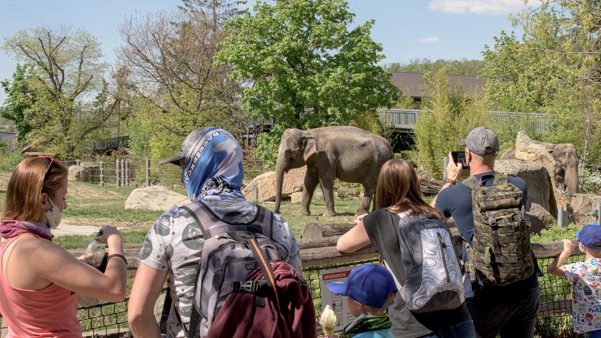 Slonici zRakouska se ve Dvoře Králové daří dobře, již chodí ven