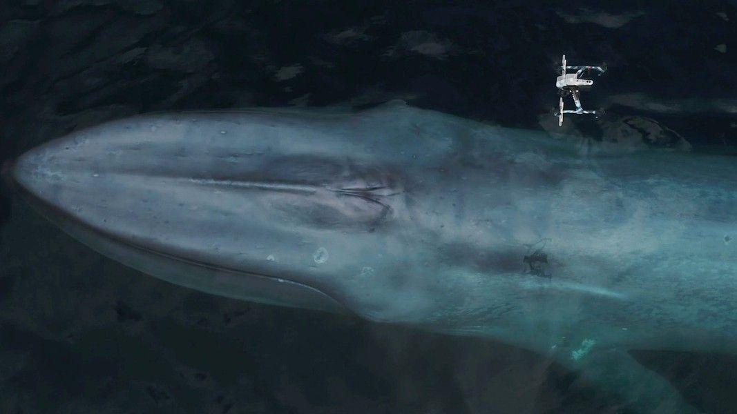 Fotky, které se jen tak nevidí: Drony sbírají na moři hlen velryb