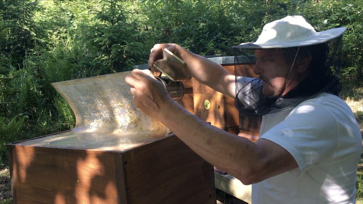 """Oslabené včelstvo a čtyřikrát méně medu. Včelař ukázal, jak se včelám """"dařilo"""" na řepce"""