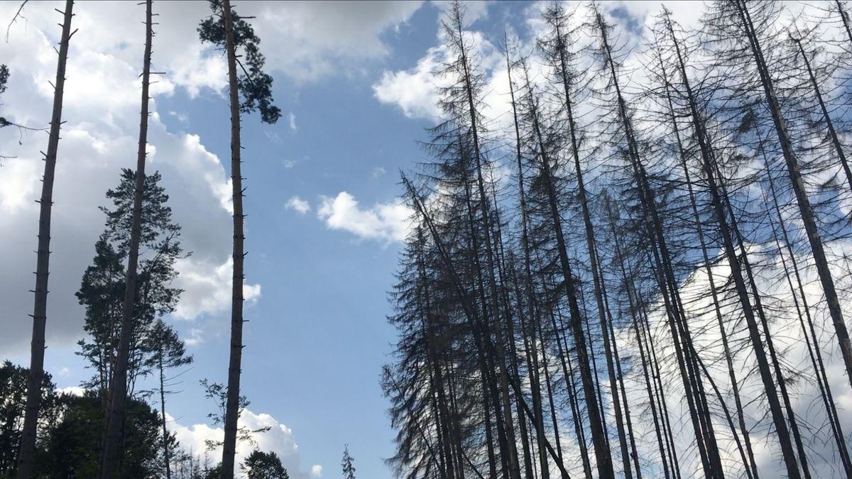 Boj skůrovcem komplikují malí vlastníci lesů. Pokutám se často vyhnou